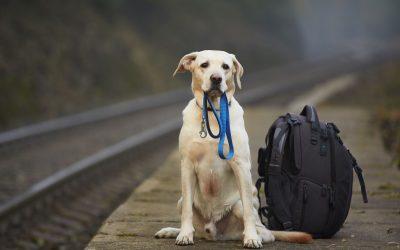 آیا حمل حیوانات خانگی با اتوبوس امکان پذیر است؟